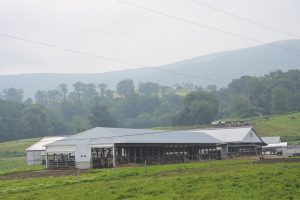 The heifer and dry cow barn has several bedded packs with access to pasture.
