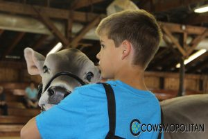 Nelson McCammon Youth Heifer Program Now Accepting Applications